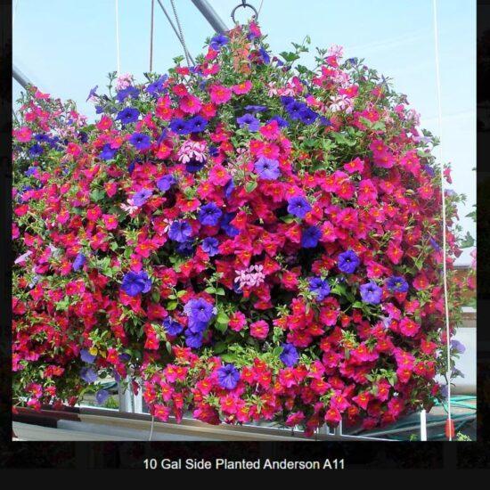 10 Gallon Flower Baskets