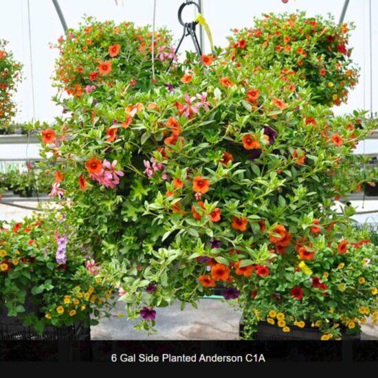 6 Gallon Flower Baskets