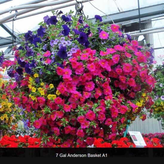 Side Planted Flower Baskets
