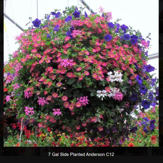 Anderson Flower Baskets