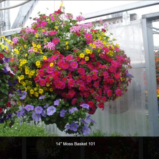 14 Inch Flower Baskets