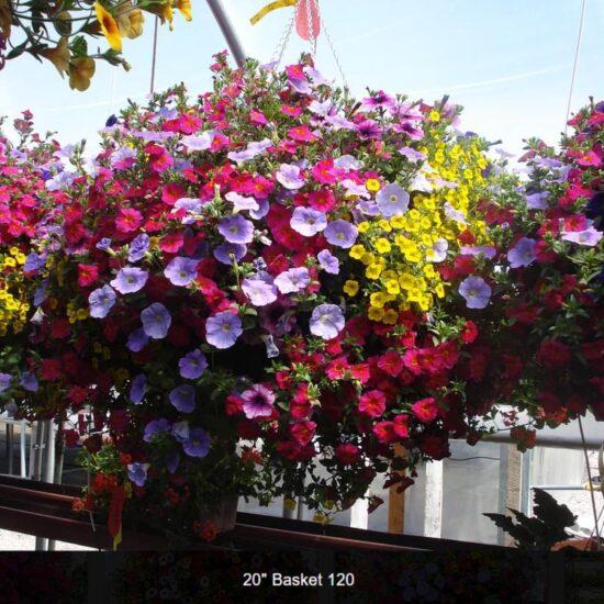 Full Sun Flower Baskets