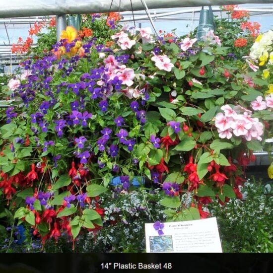 Shade Flower Baskets